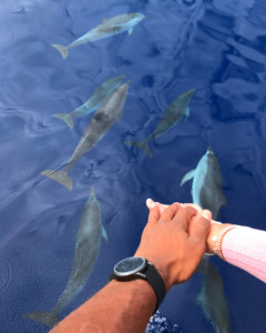 dolphin-watching-azores-blog