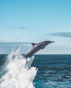 whale-dolphin-watching-azores-blog