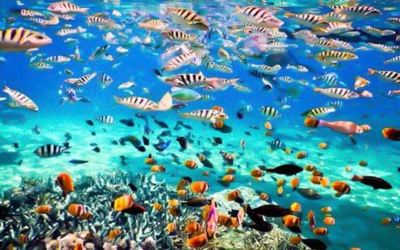Koh-Tao-snorkeling