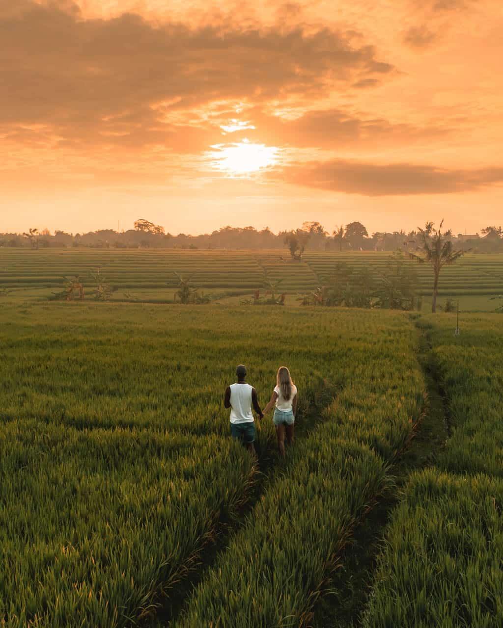 canggu-ricefields-drone