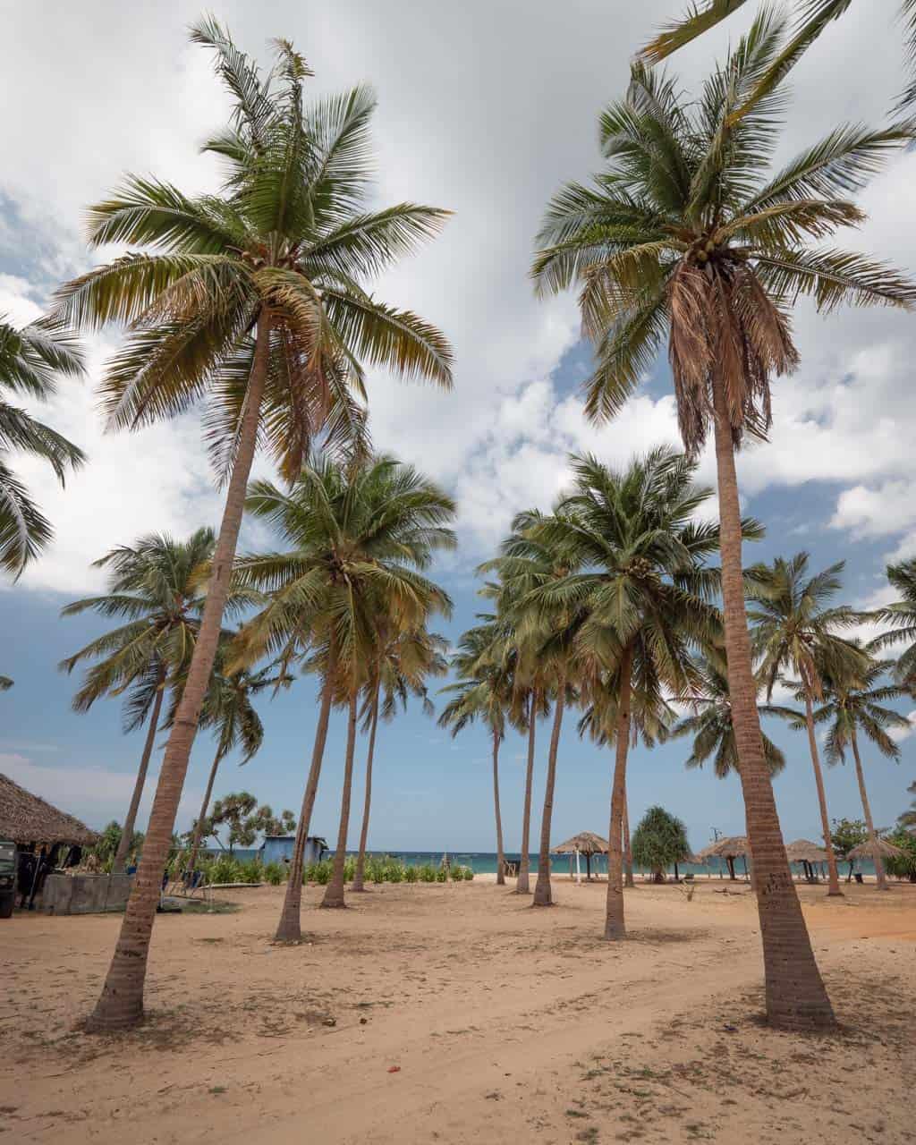 Trincomalee-nilaveli-beach-palmtrees