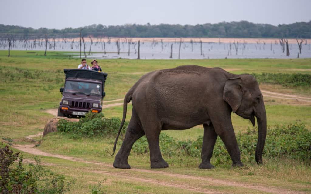 minneriya-national-park-safari-elephant