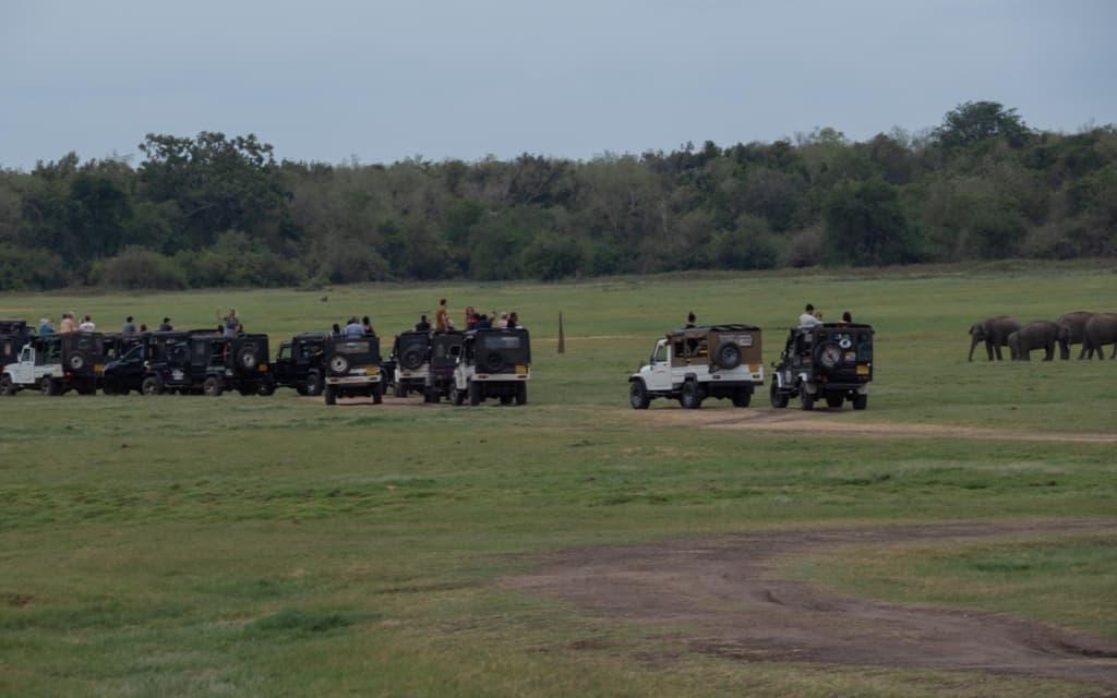 safari-sri-lanka-kaudulla-jeeps-elephants