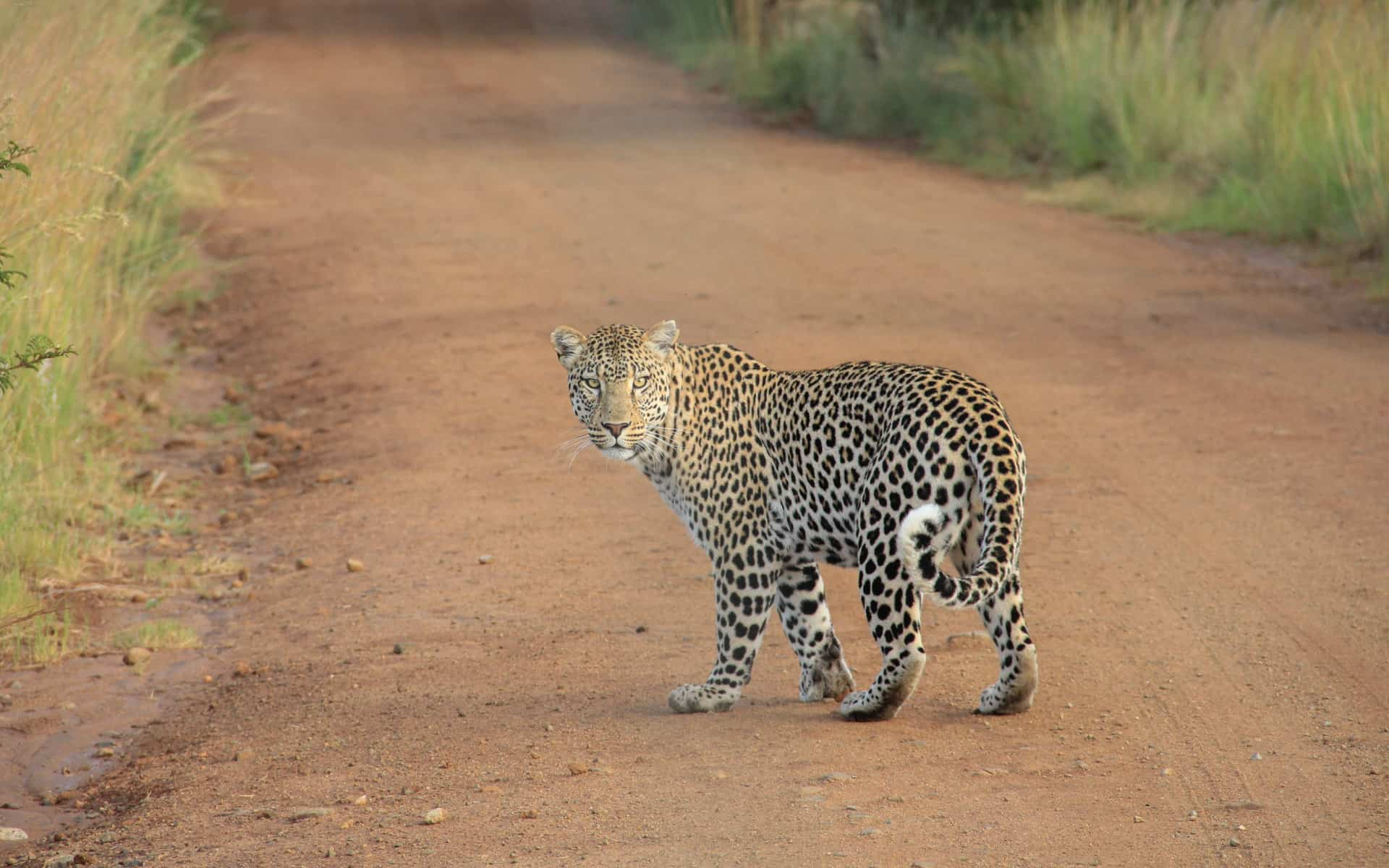 yala-national-park-leopard