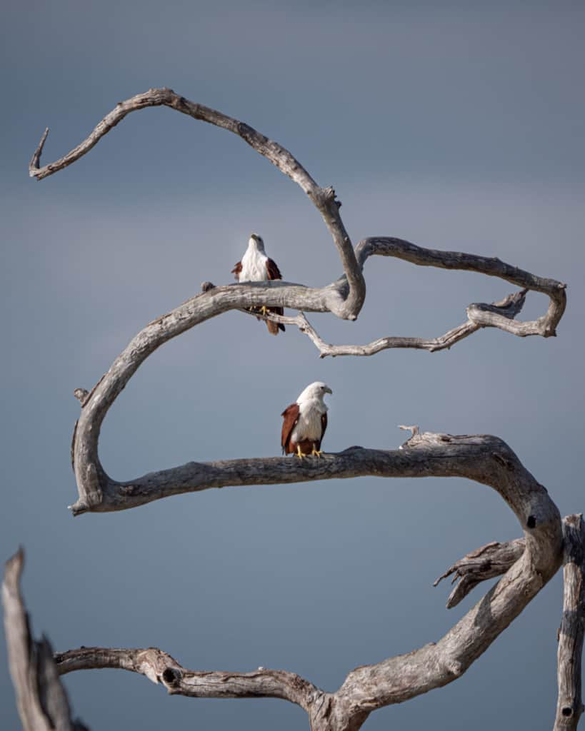 safari-sri-lanka-yala-birds-branche