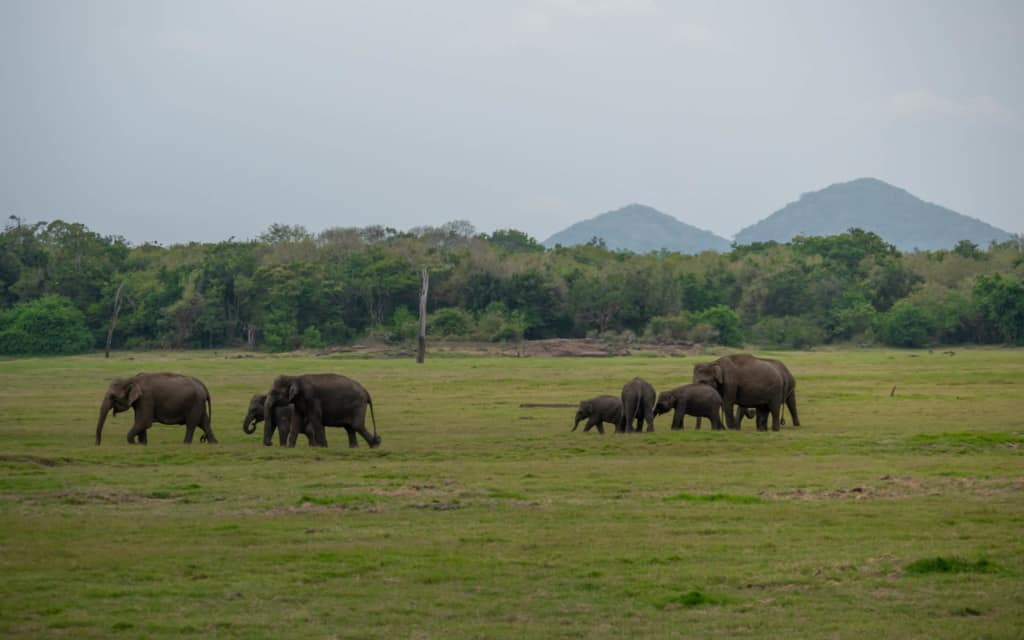 safari-wild-elephants-landscape