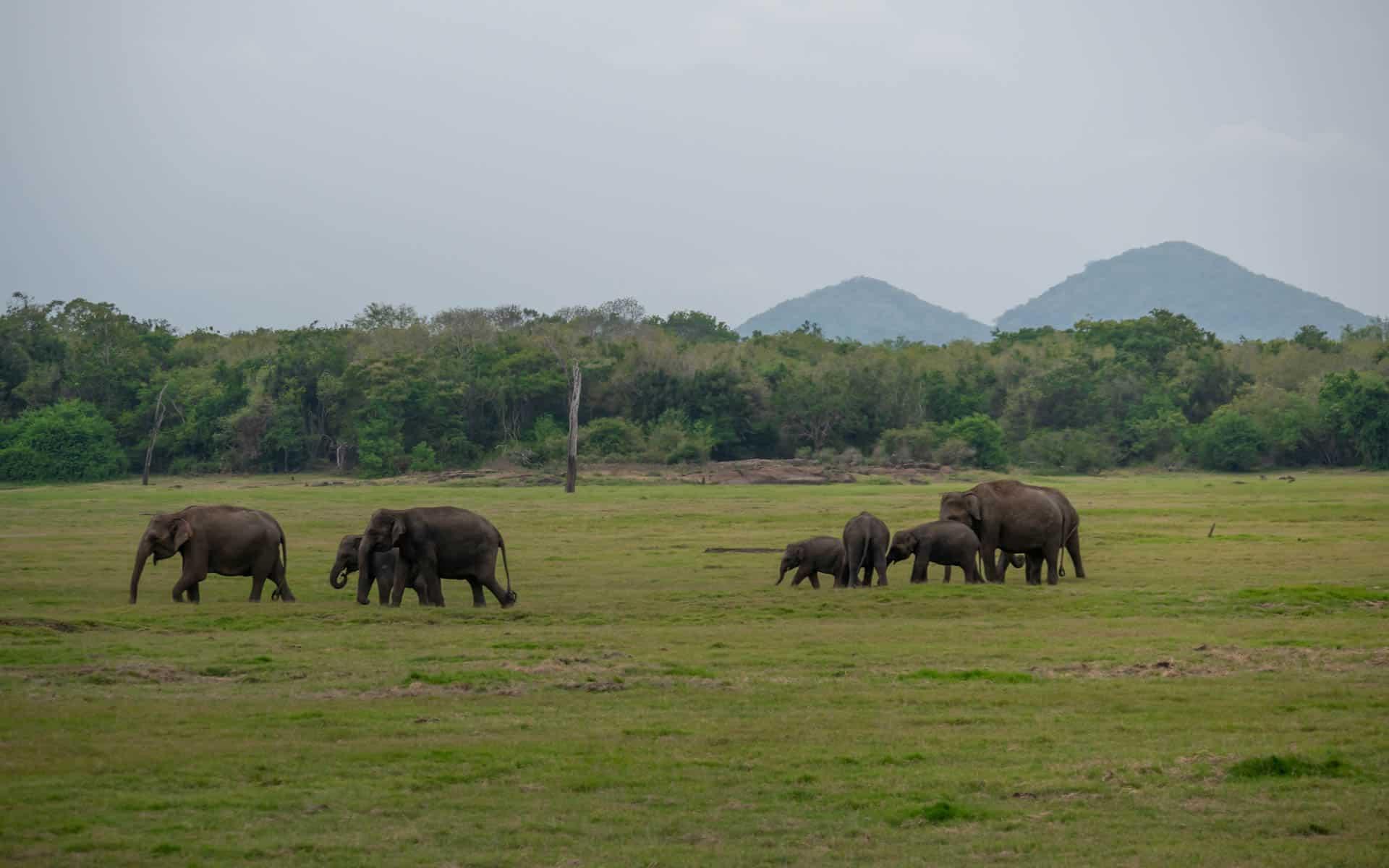 safari-wild-elephants-landscape