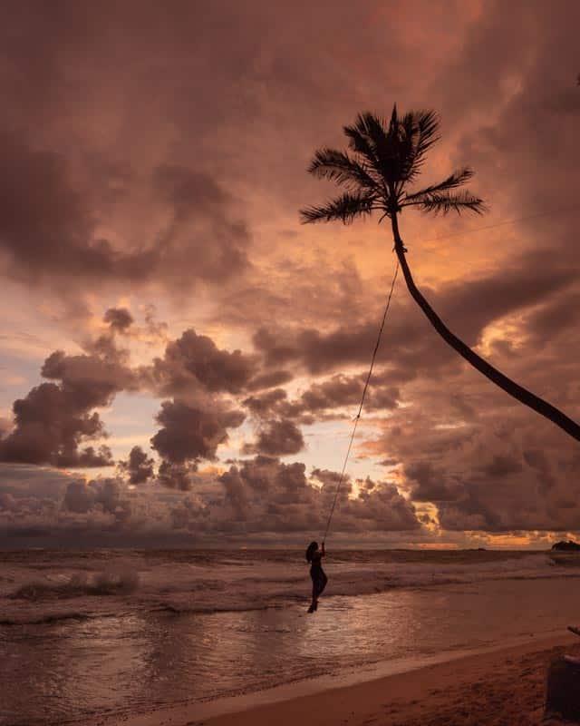 palmtree-swing-dalawella-beach