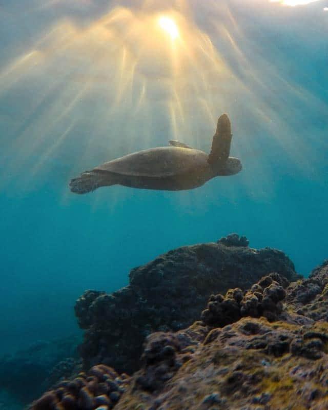 turtle-sri-lanka