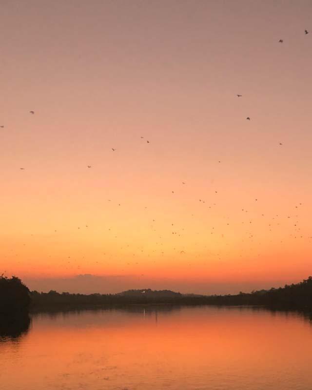 mirissa-things-to-do-lagoon-bats