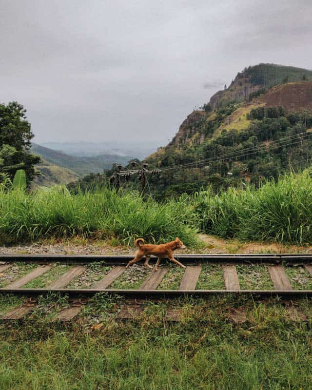 train-track-ella-rock
