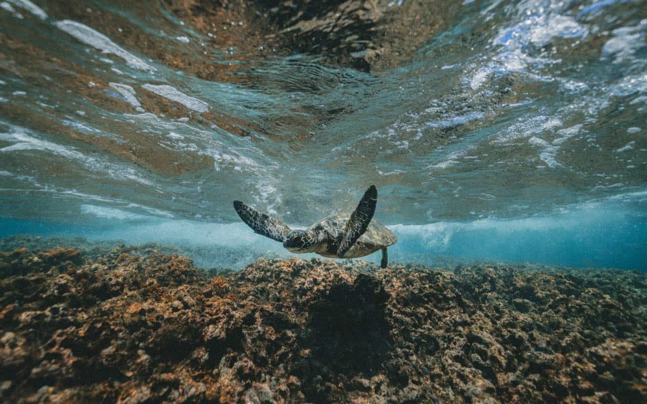 turtle-sea