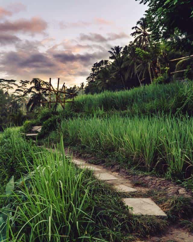tegalalang-path