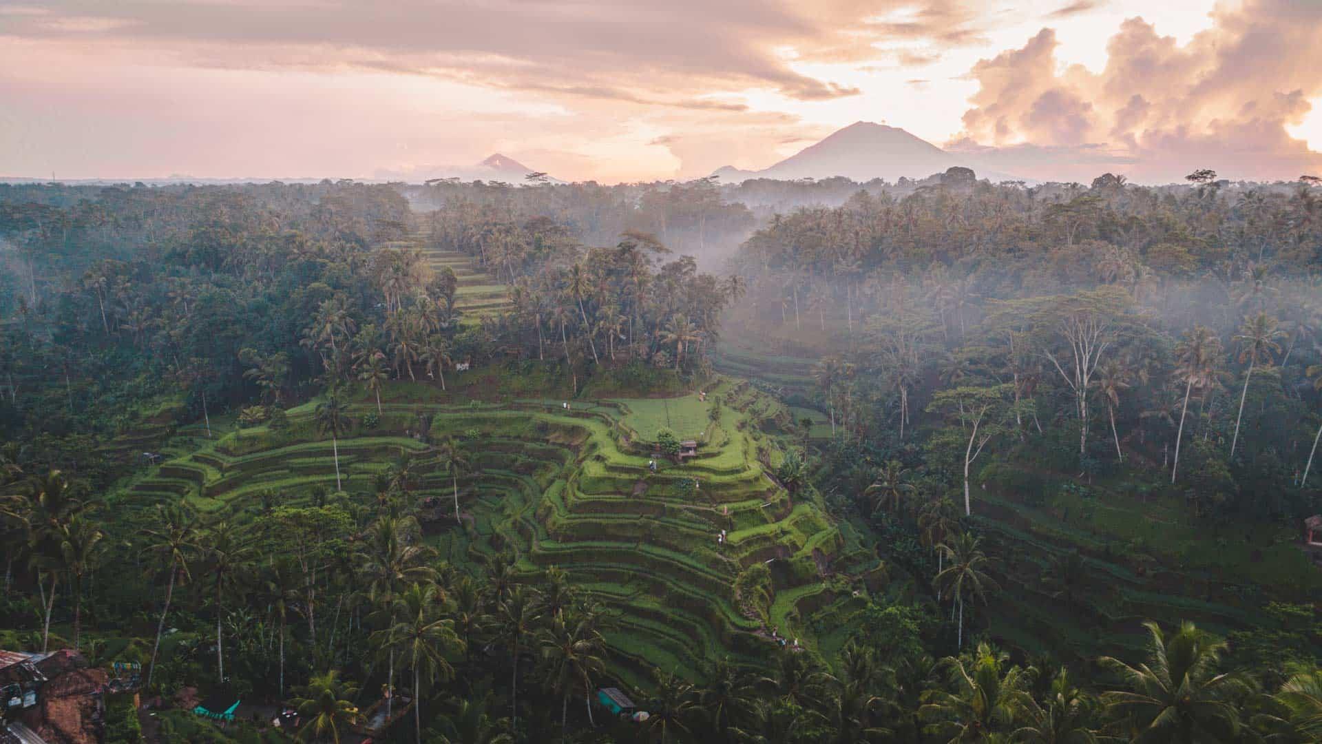 tegalalang-rice-terraces